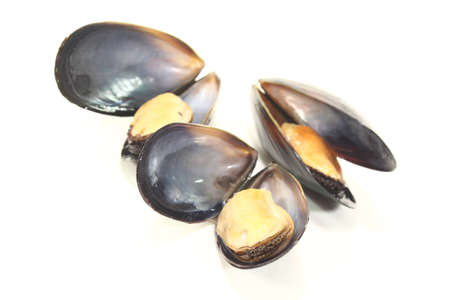three fresh cooked Mussels on a white background photo