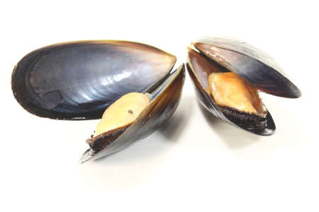 two steamed Mussels on a white background photo
