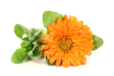 orange marigold flowers with leaves on a bright background Stock Photo - 13225729