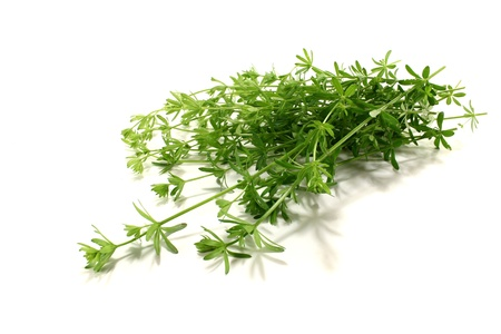 ulcers: fresh green Bedstraw with leaves on a bright background Stock Photo