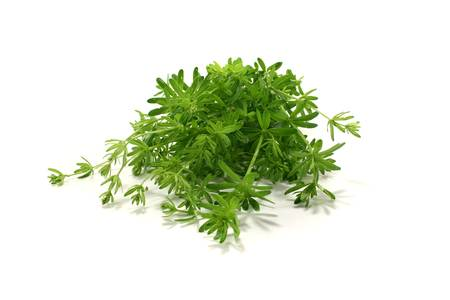 ulcers: green Bedstraw with leaves on a bright background Stock Photo