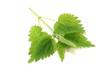 green nettle leaves on a bright background