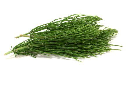 horsetail: fresh green horsetail on a light background