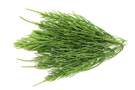fresh natural green horsetail on a light background Stockfoto