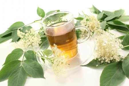 hot elderflower tea with elder flowers and leaves