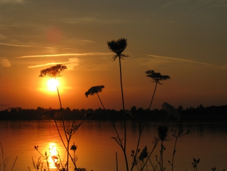 queen anne   s lace: Sunset in the evening at the lake with wild carrot