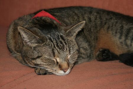 animal related: cat lying with closed eyes and scarf on the couch