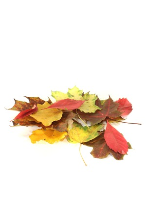 transient: decorative autumn foliage on a light background