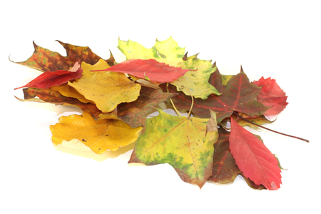 transient: colorful autumn leaves on a light background
