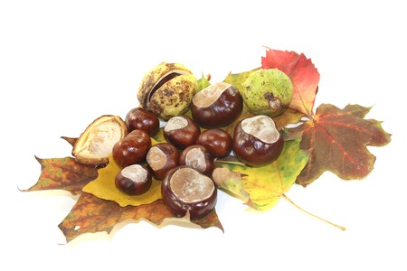buckeye seed: horse chestnuts with autumn leaves on a light background