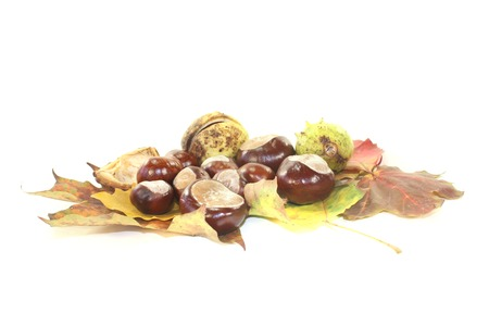 brown horse chestnuts with autumn leaves on a bright background photo