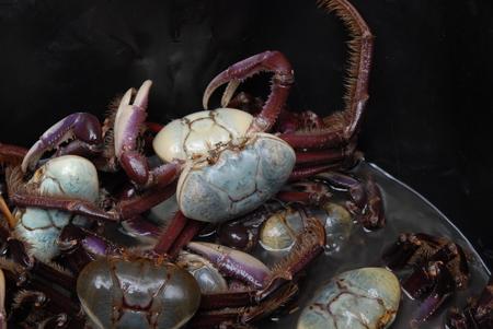 suriname: Blue crab Suriname