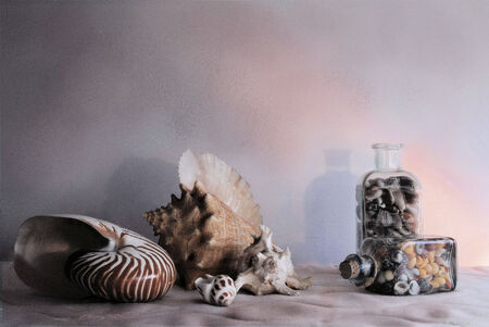 Stilllife seashell photo