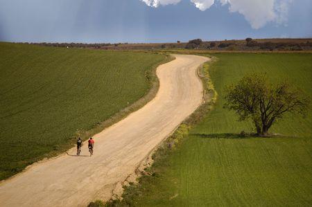 Olive tree in the green field and bicycles in route - Bicicletas en ruta y olivo en el camino Stock Photo