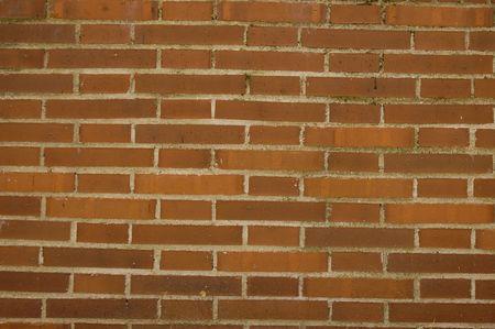 Testina pared de ladrillo - Texture muro di mattoni