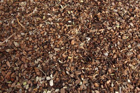 fondo textura de corteza de pino - Bark of pine texture
