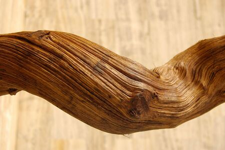 adorning: tronco de madera - Trunk of wood Stock Photo