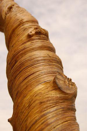 tronco de madera - Trunk of wood Banco de Imagens