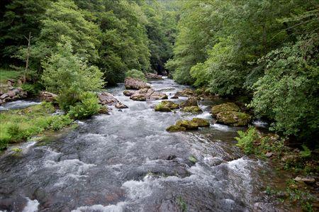 Leiza river and trees with vegetation. Leizaran Valley. Navarra, Spain Stock Photo