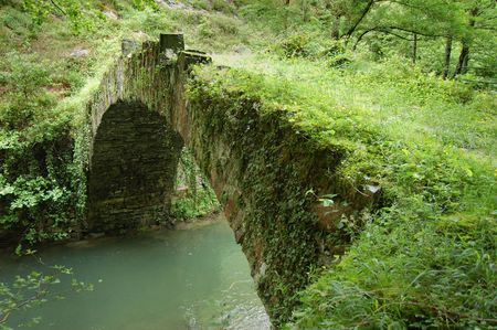 vegatation: Aged Bridge and Tree with Vegatation. Leitzaran Valley, Navarra. Spain