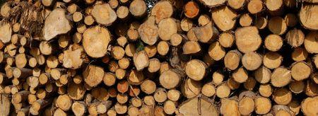 Logs pile photo