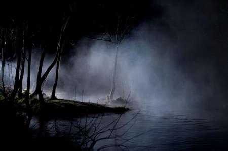 woods lake: Misteriosi alberi in una foresta Haunted con Mist Archivio Fotografico
