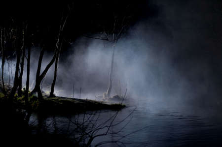 Mysterious Trees in a Haunted Forest With Mist photo