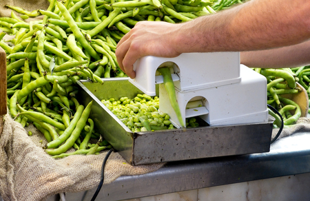 thresh: Threshing ecological lima beans in a market. Stock Photo