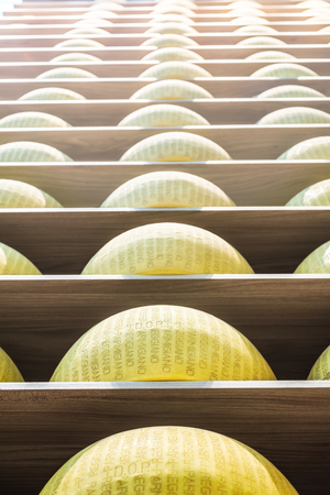 maturing: Wheels of Parmigiano-Reggiano or Parmesan cheese on the shelves of a maturing storehouse in Parma. Emilia-Romagna. Italy.