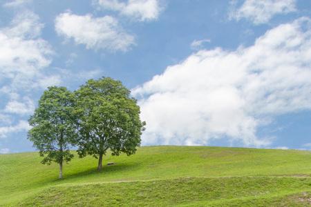 gill: twin tree