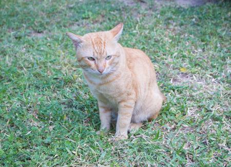 Cute cat in green lawn Banco de Imagens