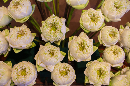 Background of white lotus