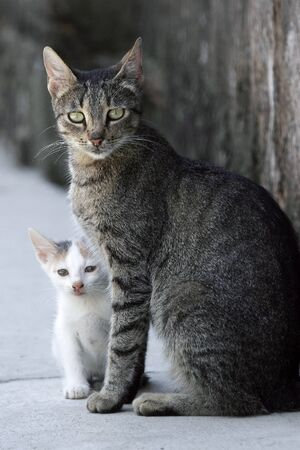 Close up off gray cat and white kitten standing next to each other Stock Photo