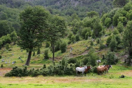 Group of white and brown wild horses standing in the middle of beautiful meadow in the forest. Stock Photo