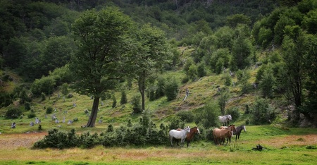 Group of white and brown wild horses standing in the middle of beautiful meadow in the forest. Stock Photo - 11398502