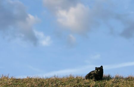 One eared black cat on the meadow is waiting for a pray Stock Photo - 11813037