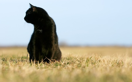 Black cat on the meadow. photo