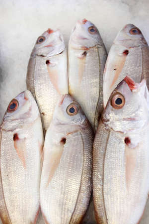 Group of bream fish on the fish market photo