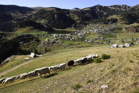 Herd of white and black sheep walking on a mountain and village of Vranica with that is central Bosnia s highest mountain at 2112 meter  photo