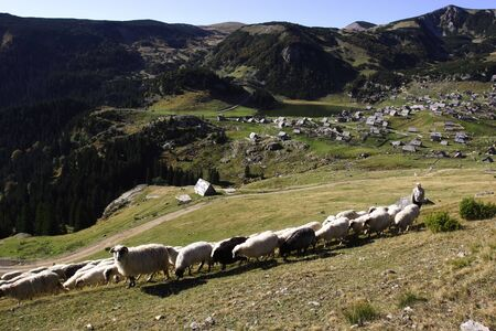 Herd of white and black sheep walking on a mountain and village of Vranica with that is central Bosnia s highest mountain at 2112 meter Stock Photo - 13838206