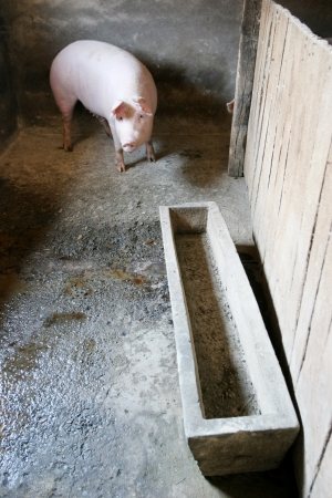 Pigs in the private pigsty photo