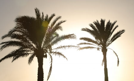 Sunset with palm trees   Silhouette of two palm date trees at sunset photo