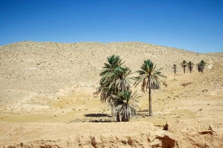 Desert dunes of Sahara near Tamezret , Tunisia  photo
