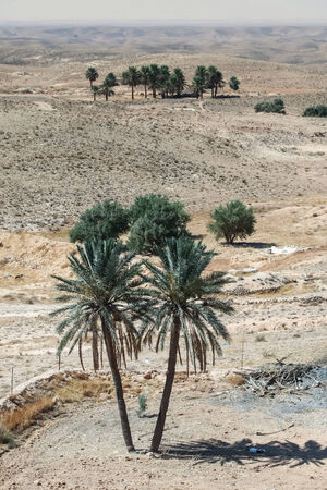 matmata: Palm trees in Sahara desert near the town Tamezret  in Tunisia  Stock Photo