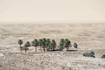 A small oasis near town Tamezret  in Sahara desert in Tunisia  photo
