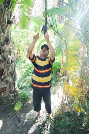 guia turistico: Tozeur, T�nez - 16 de septiembre Un gu�a se explica el procedimiento de frutas de fertilizaci�n de las fechas en las plantaciones de palmeras datileras en un oasis el 16 de septiembre de 2012 en Tozeur, T�nez