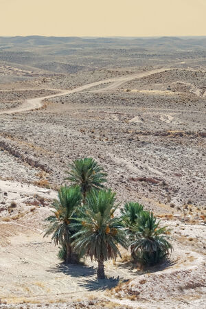 Palm trees in Sahara desert near the town Tamezret  in Tunisia  photo