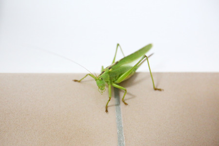 A close up of a grasshopper on a tiled bathroom wall. photo