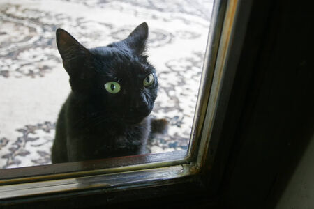 A close up of a black domestic cat looking outside through the glass door.