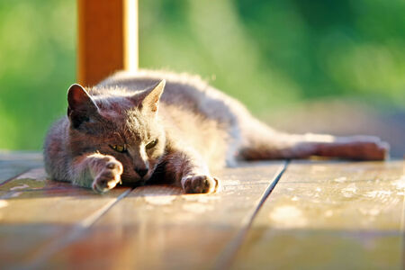 cat stretching: A grey cat sleeping on an empty wooden stand. Stock Photo